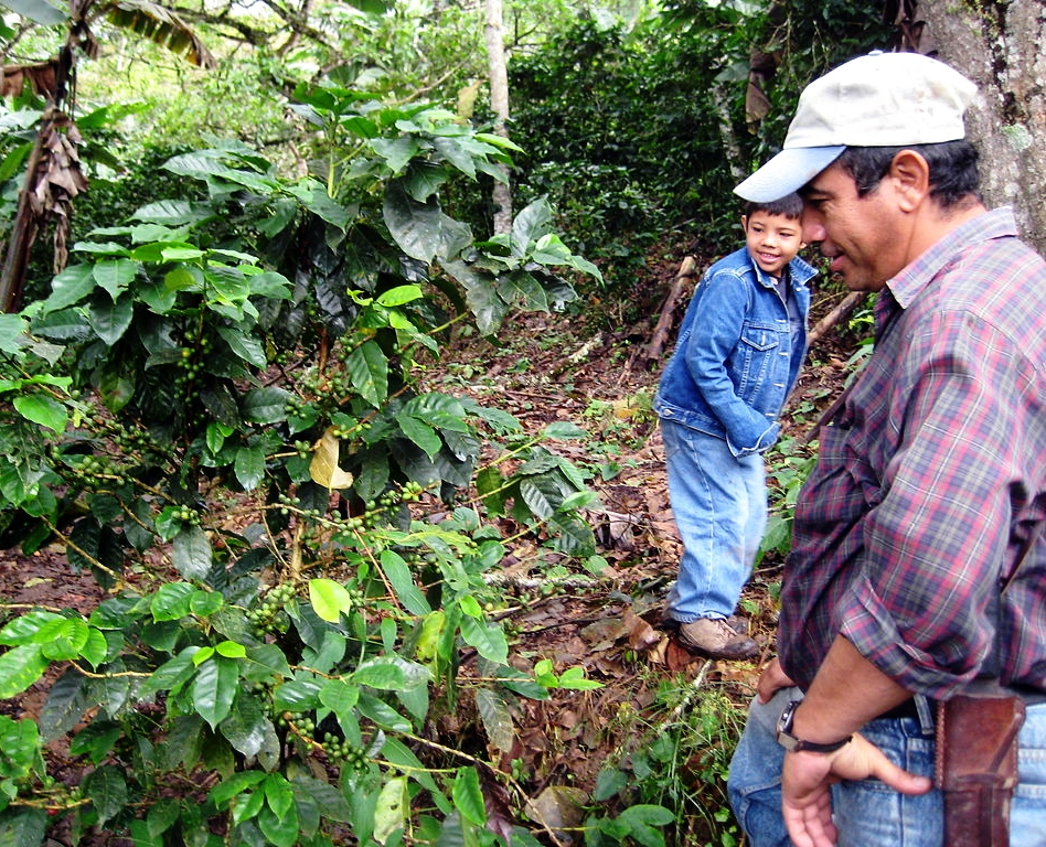 Coffee_Farmer_ and Son_ Coffee_Crop_near_Quilalí_-_San_Juan_del_Río_Coco..jpg