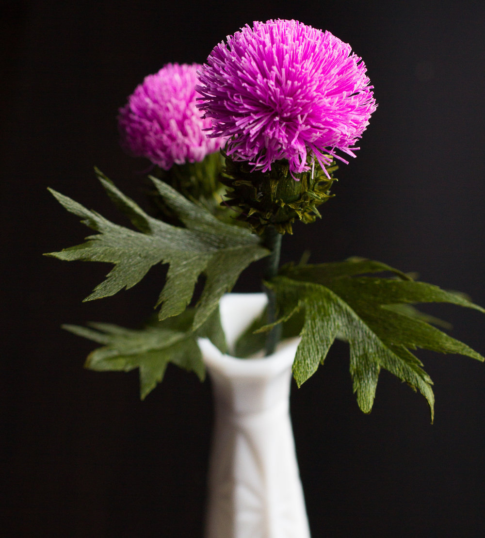Scottish Thistles-2.jpg
