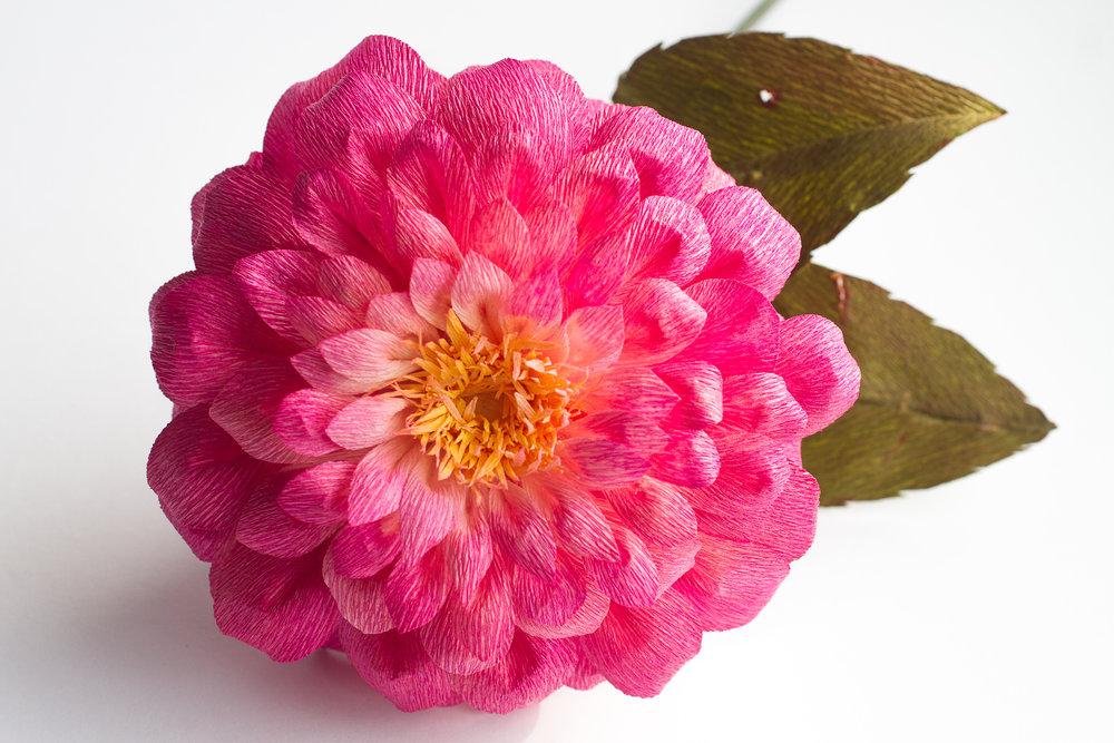 pink_dahlia-1.jpg