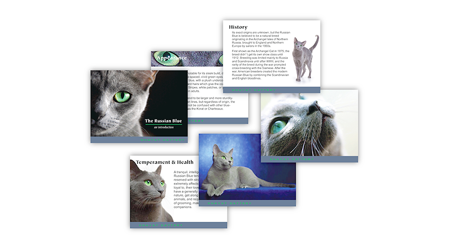 breed information slide set to run on a loop at benched cat show