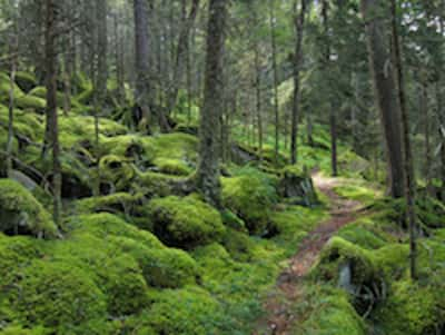 hemlock-forest-in-great-smokey-mountain-national-park.jpg