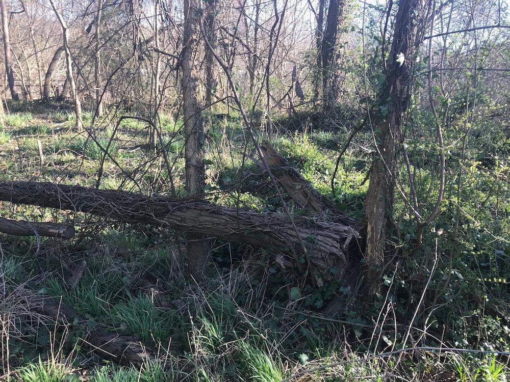 Fallen Elm Branch