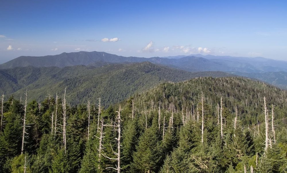 Eastern Hemlock Tree Extinction, Great Smokey Mountains National Forest, NC & TN ID 44230894 © Ehrlif | Dreamstime.com