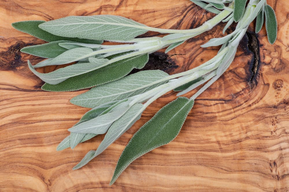 sage-leaves-salvia-officinalis Photo 142169167 © Bohuslav Jelen - Dreamstime.com.jpg