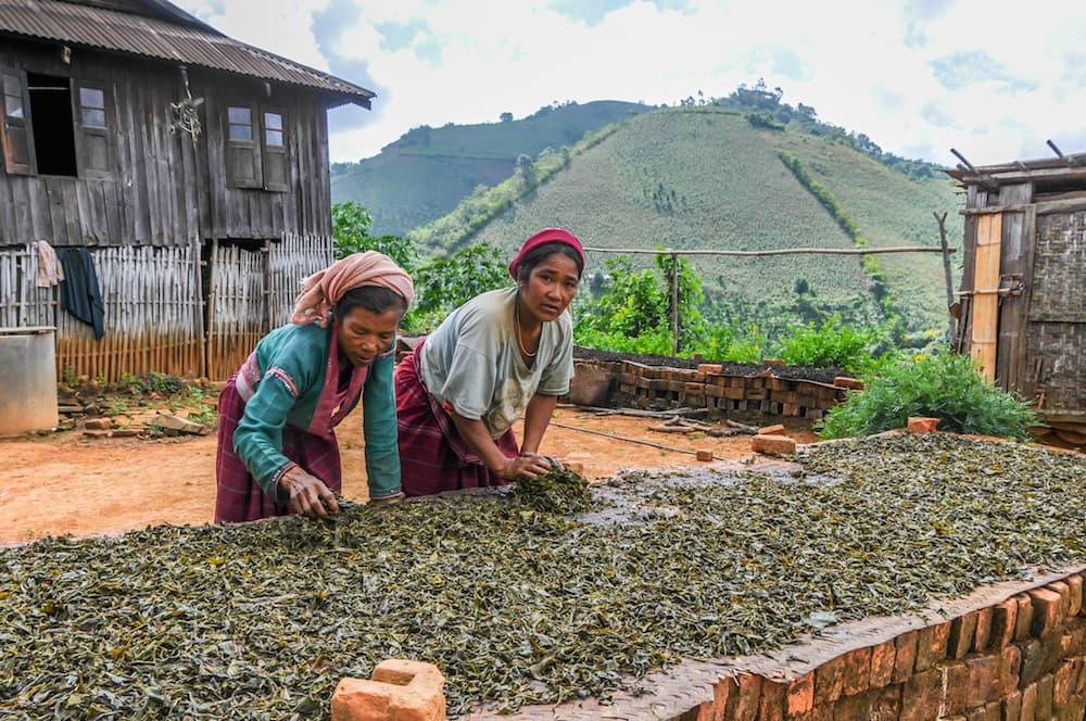 tea leaves drying, myanmar ID 33231326 © Milosk50 | Dreamstime.com.jpg
