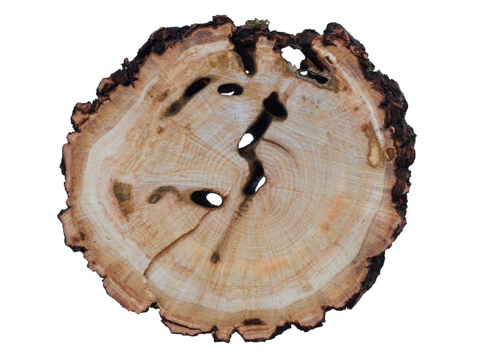 wood slice with wounds ID 108309942 © Losmandarinas | Dreamstime.com.jpg