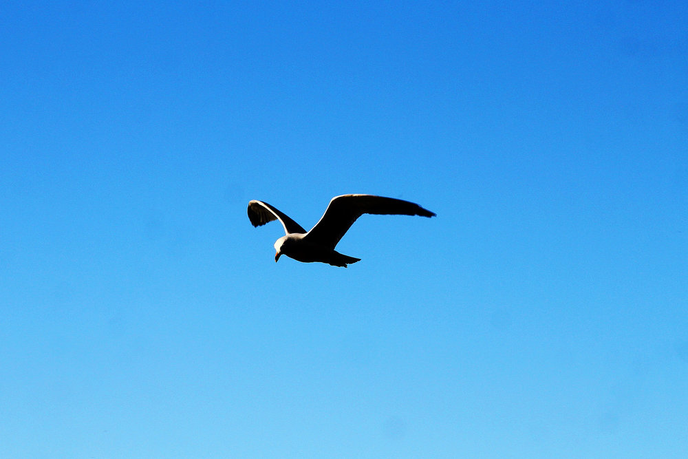 Soar like a bird once you reach financial independence