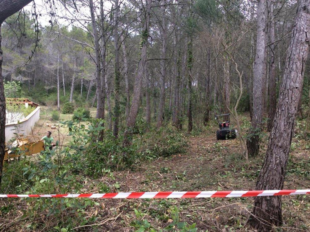 <h2>Débroussaillement forestier</h2>