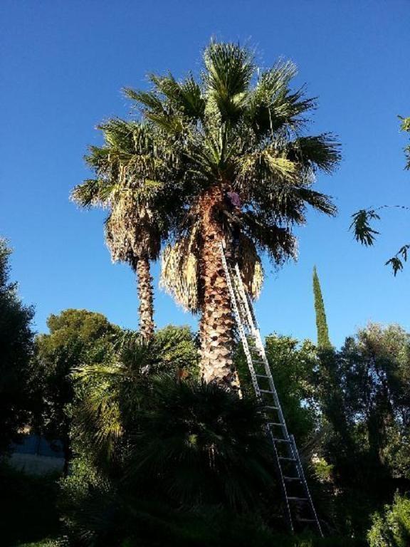 <h2>Soins de palmiers</h2>