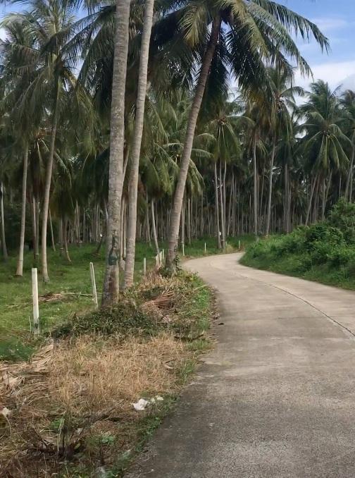 Back+roads+southern+Thailand.jpg
