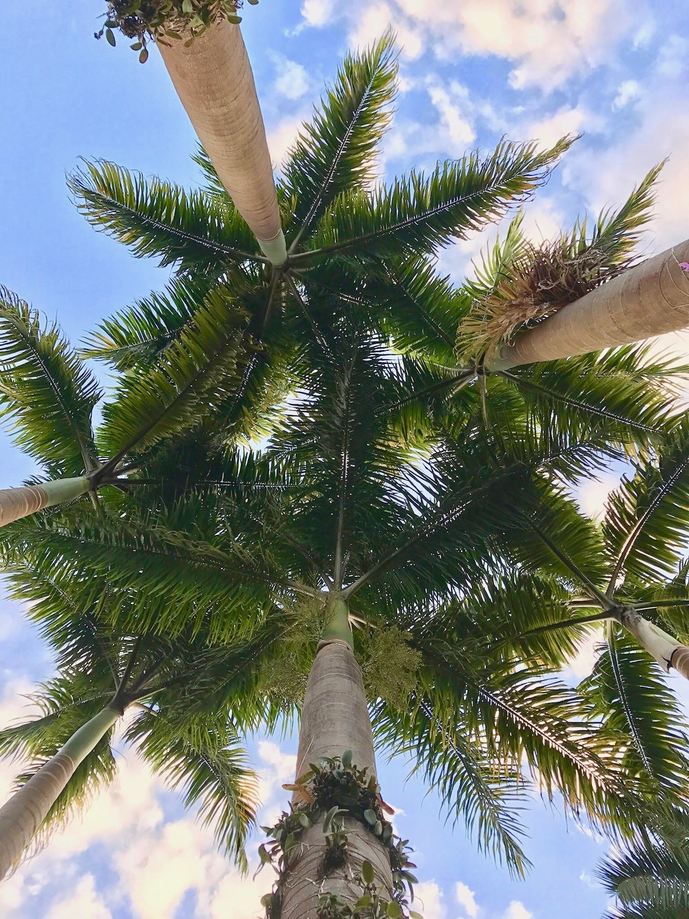 Inhotim Palm Trees
