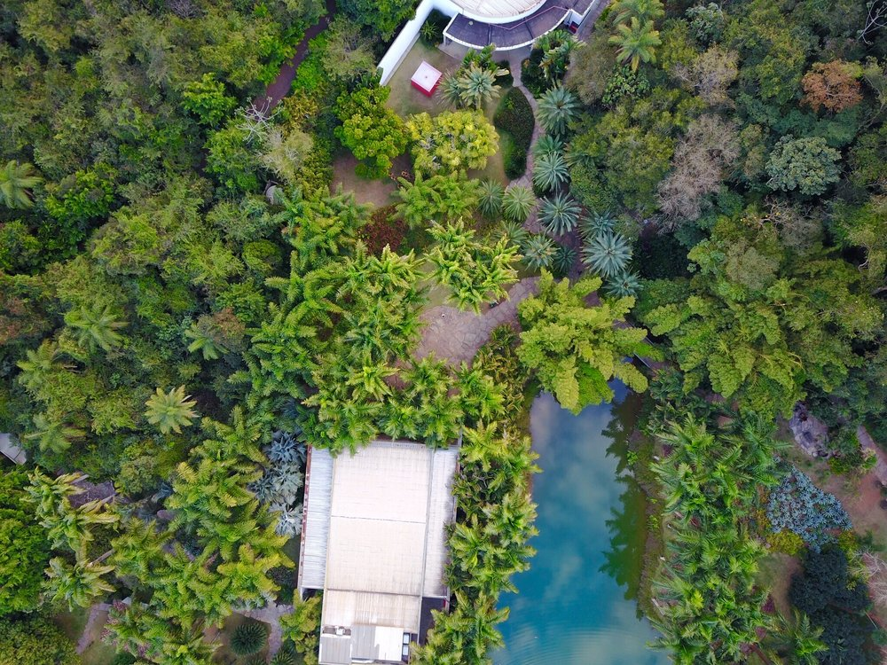 Inhotim Botanical Garden