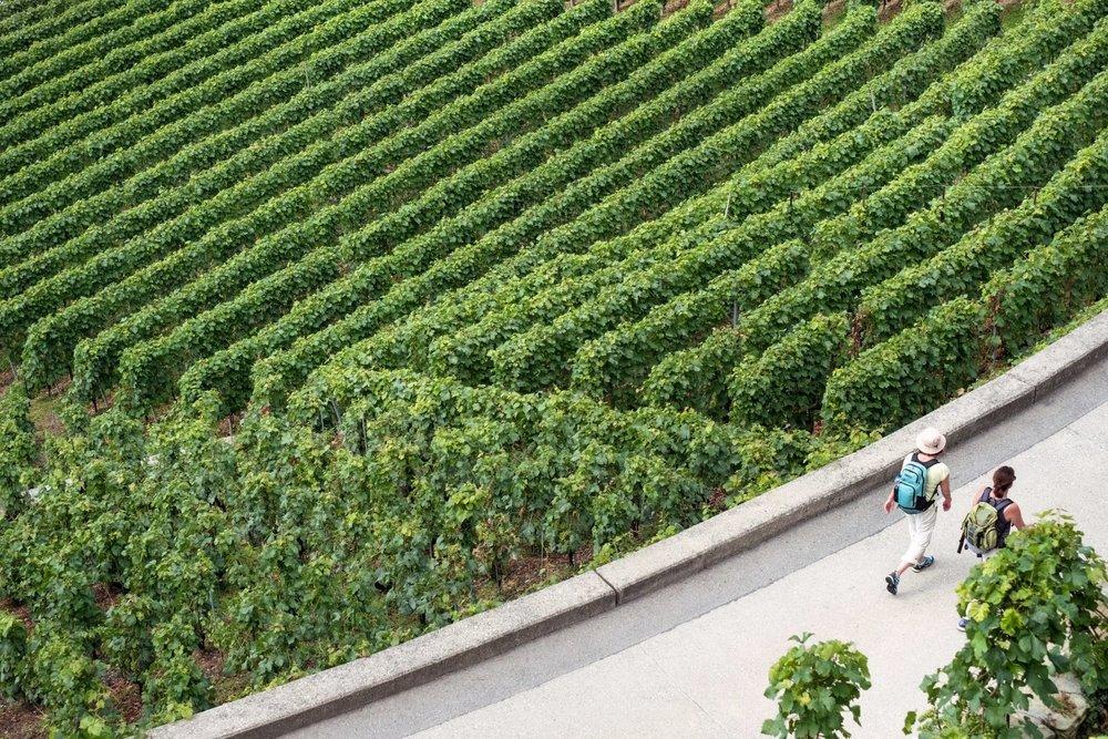 Argentina Vineyards.jpg