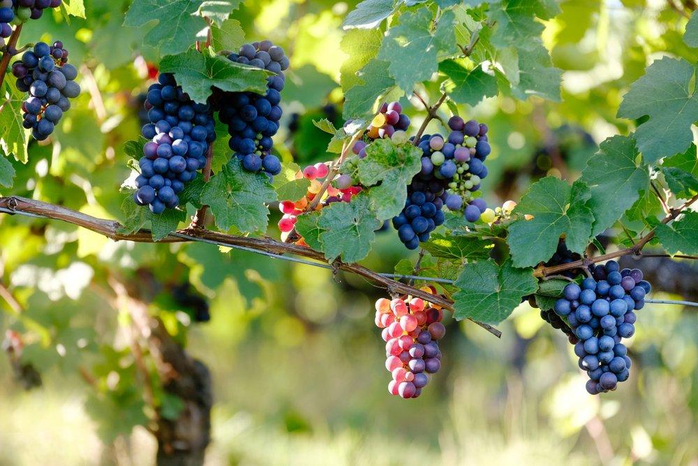 Chile Wine.jpg