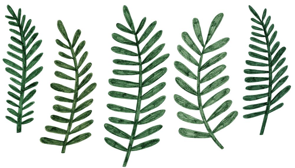 ferns.png