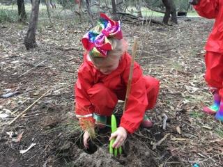 bush tree planting 4.jpeg