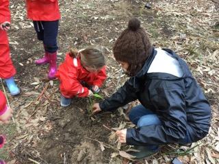 bush tree planting 6.jpeg