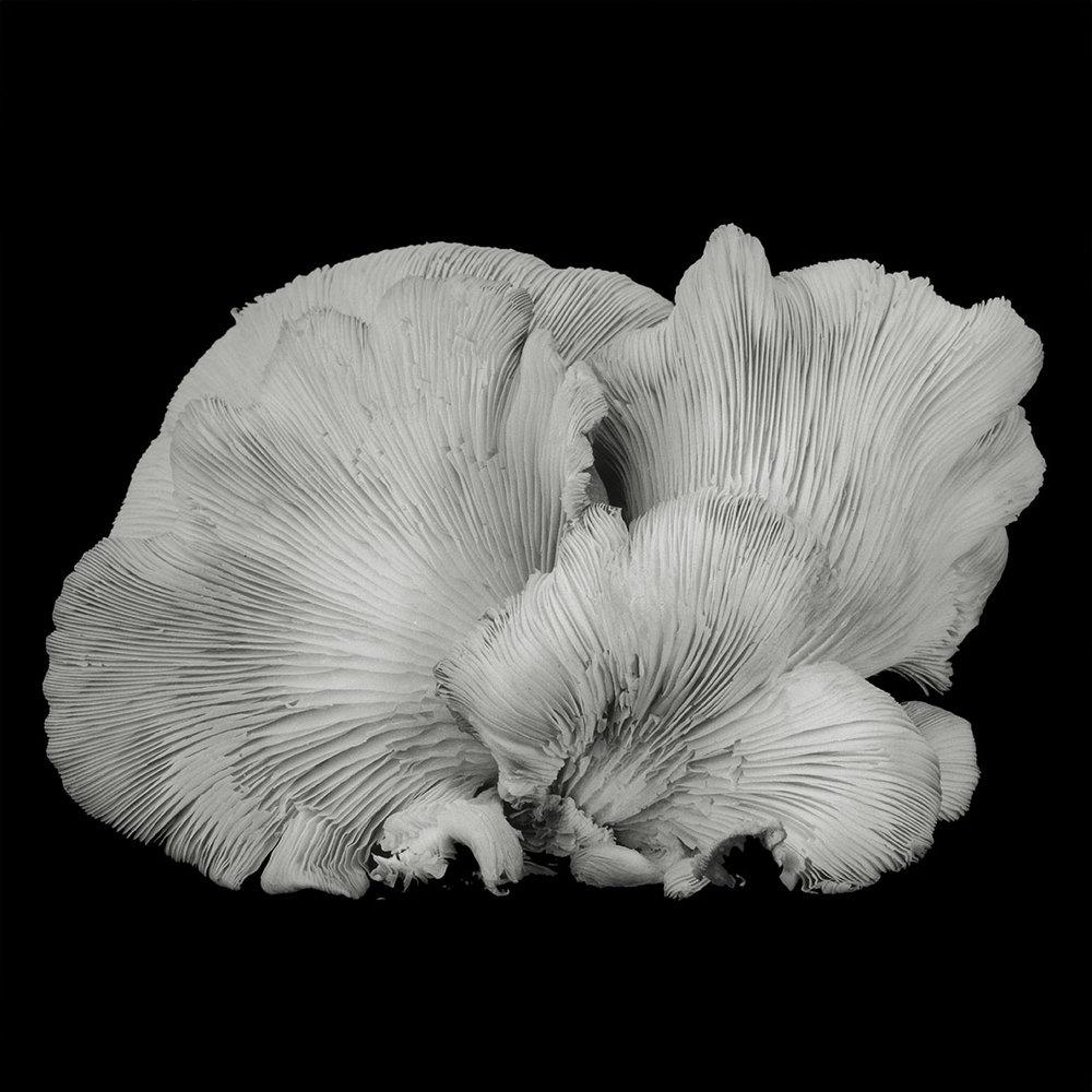 Dale M Reid_Dejeuner_Oyster Mushroom 33.jpg