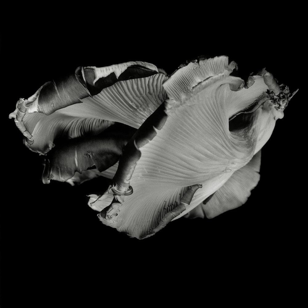 Dale M Reid_Dejeuner_Oyster Mushroom 36.jpg
