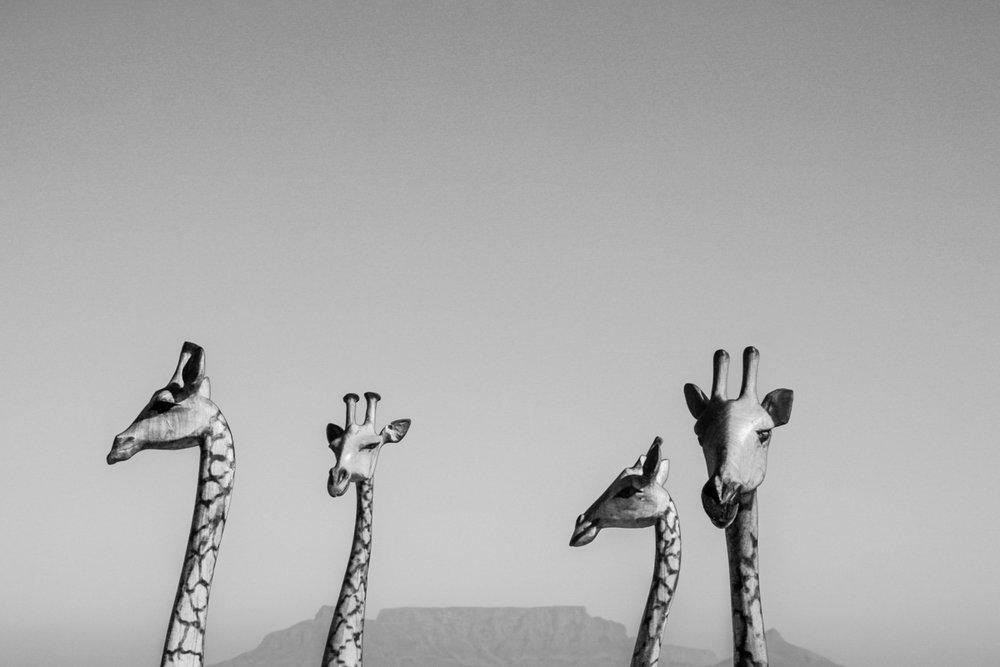 Adriaan van Heerden_Four Giraffes.jpeg
