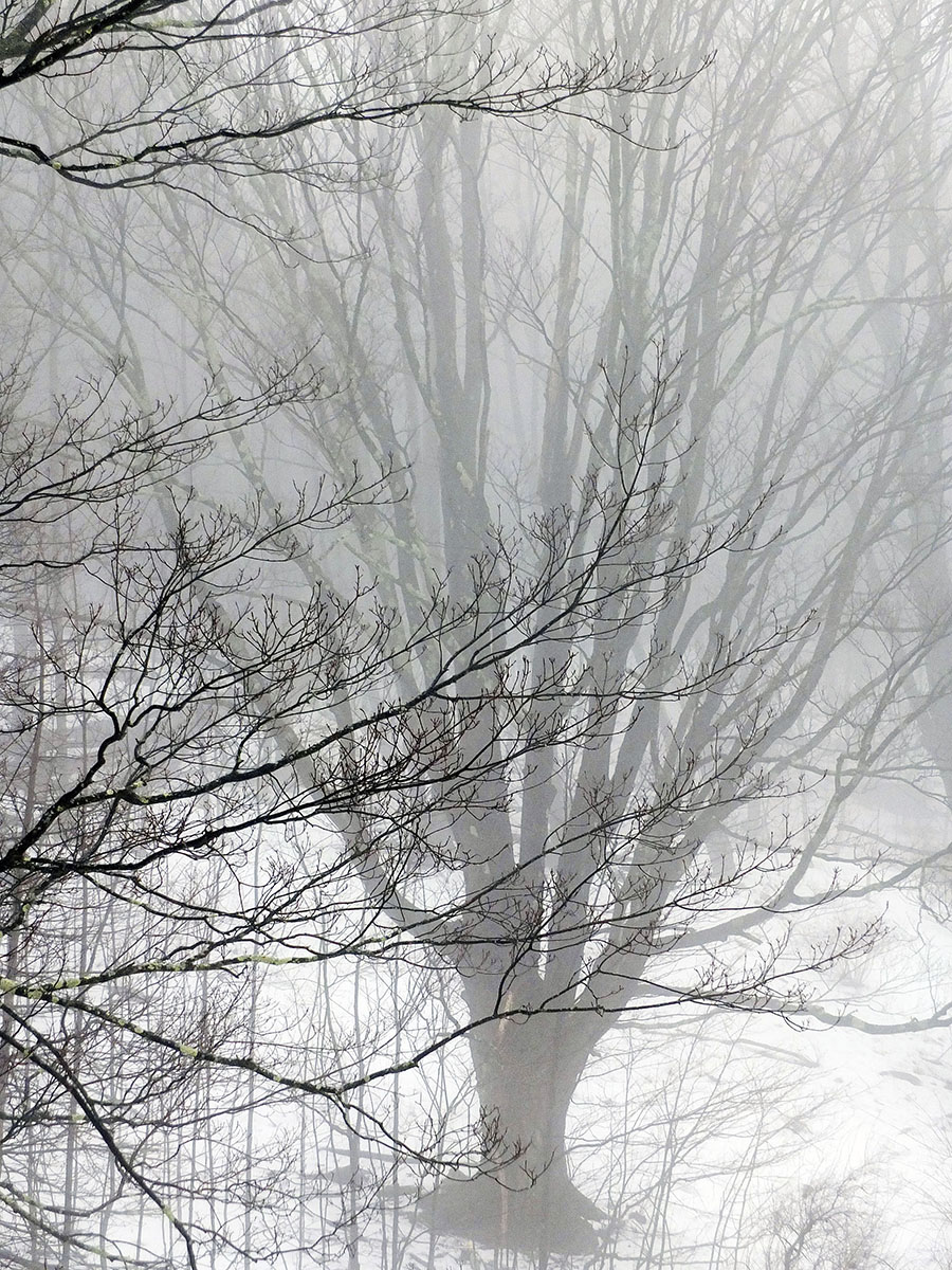 Angela P Schapiro_A Day of Fog and Snow.jpg