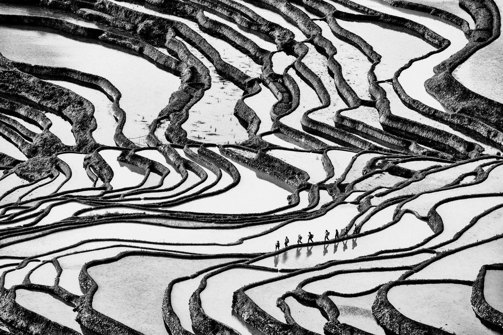 ilya genin _ hani rice terraces.jpg