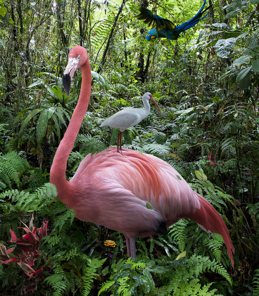 A Lost Flamingo and Egret in the Jungle