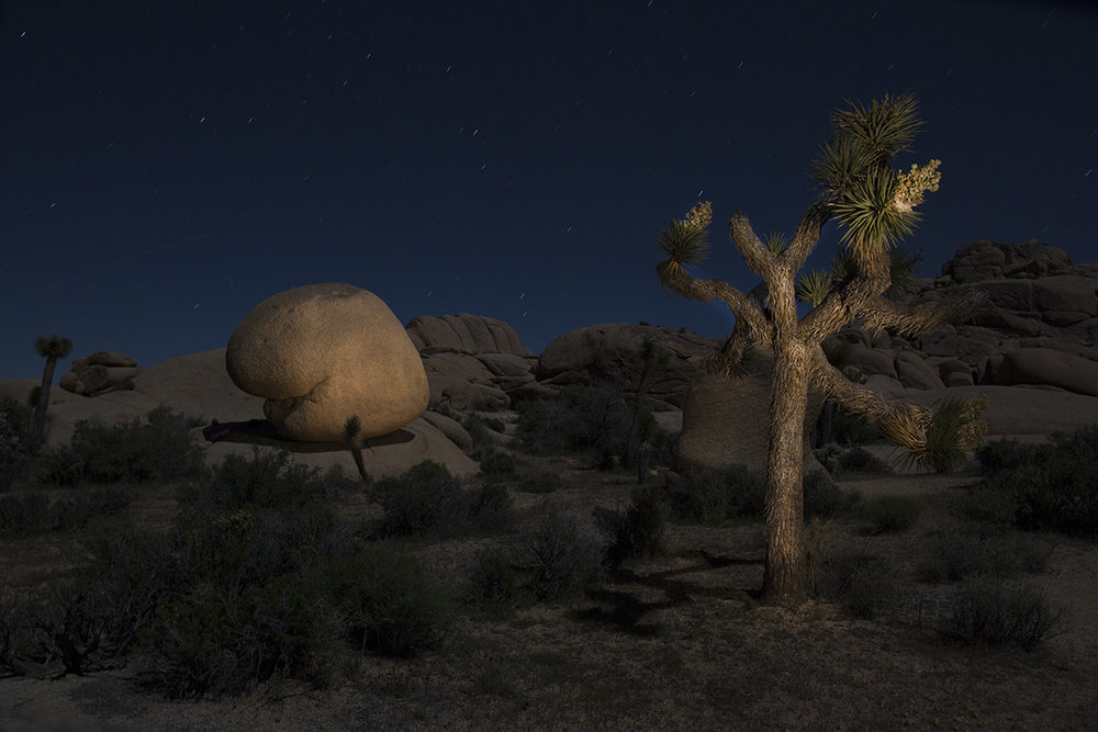 Pac Man and Joshua Tree