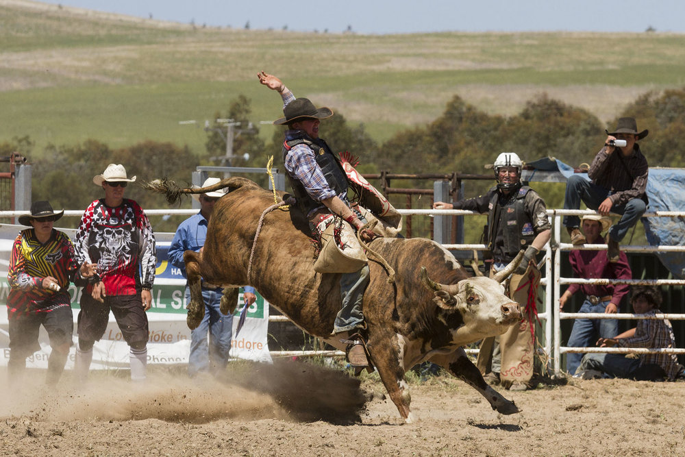 BrianJones_Rodeo Bull Riding_Bull Riding 1.jpg