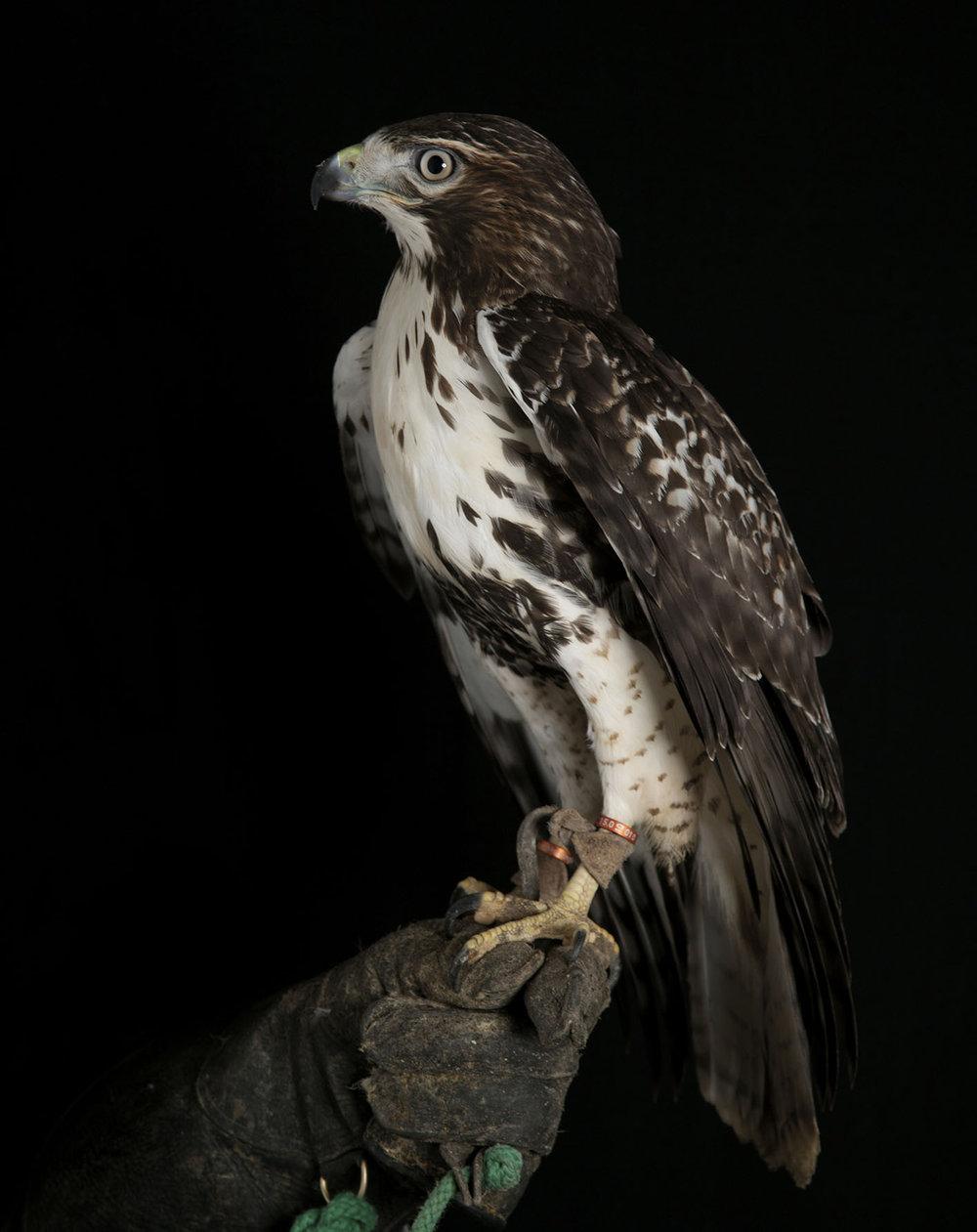 marja sterck - brid of prey 3.jpg