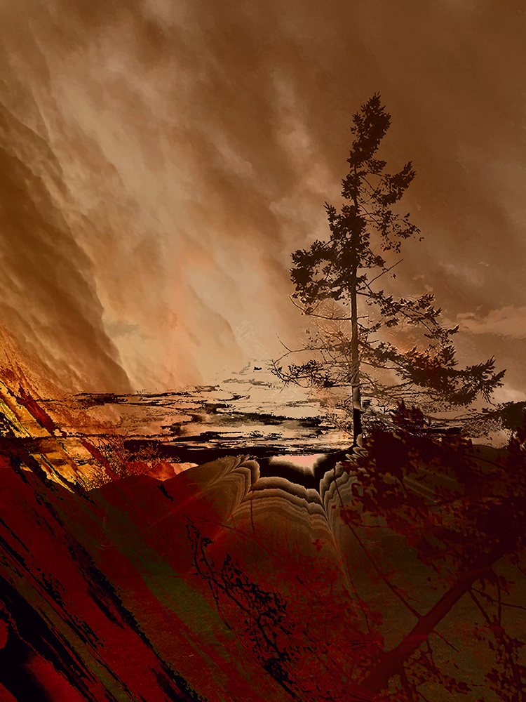 Elaine_Hunter_Sechelt Tree_ sechelt tree 4.jpg
