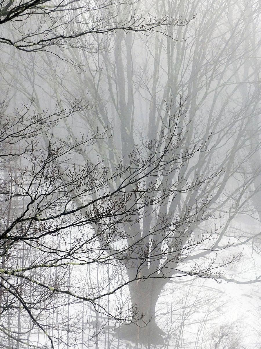 Angela P Schapiro_Winter Garden_A Day of Fog and Snow.jpg
