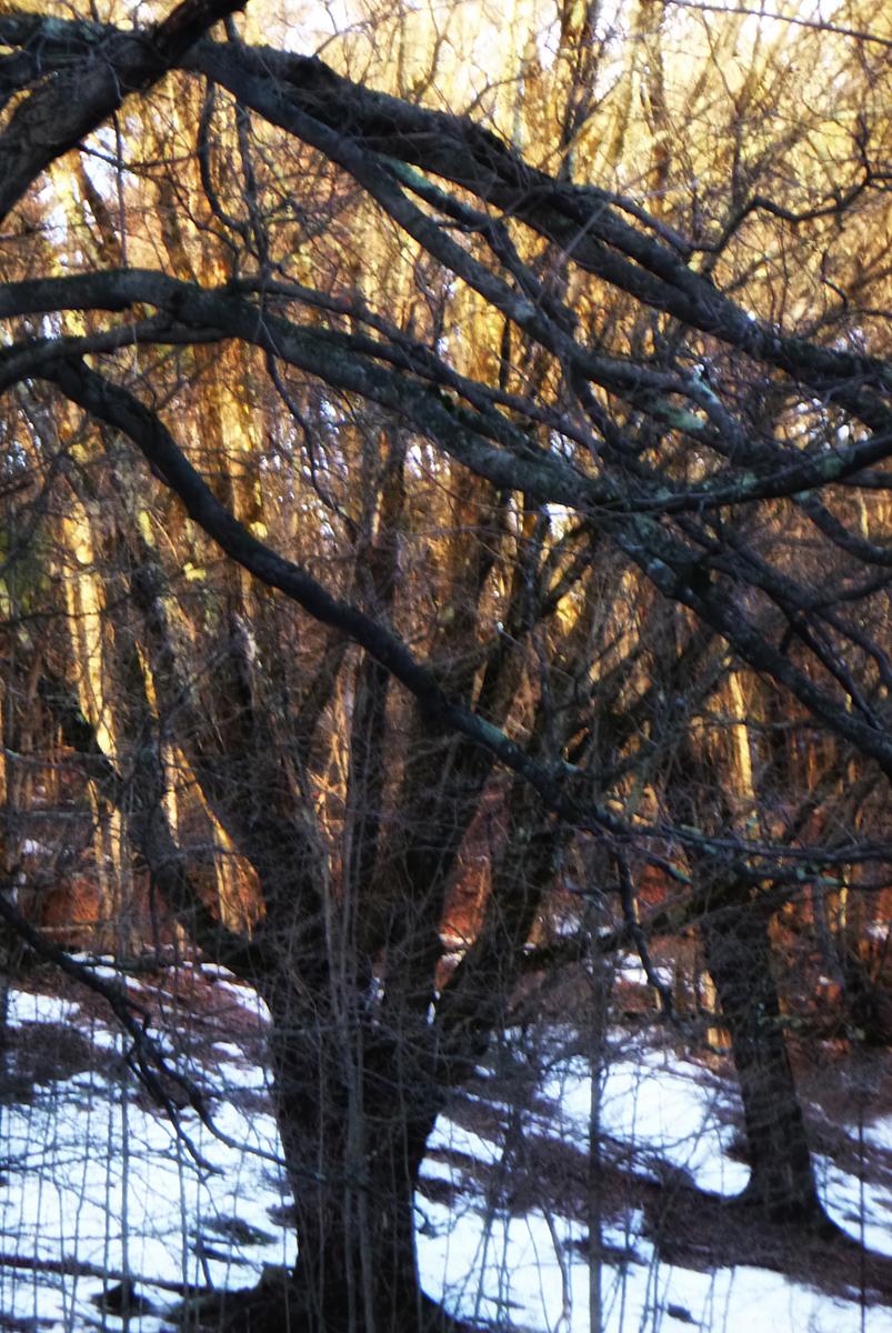 Angela P Schapiro_Winter Garden_A Day of Sun and Snow.jpg