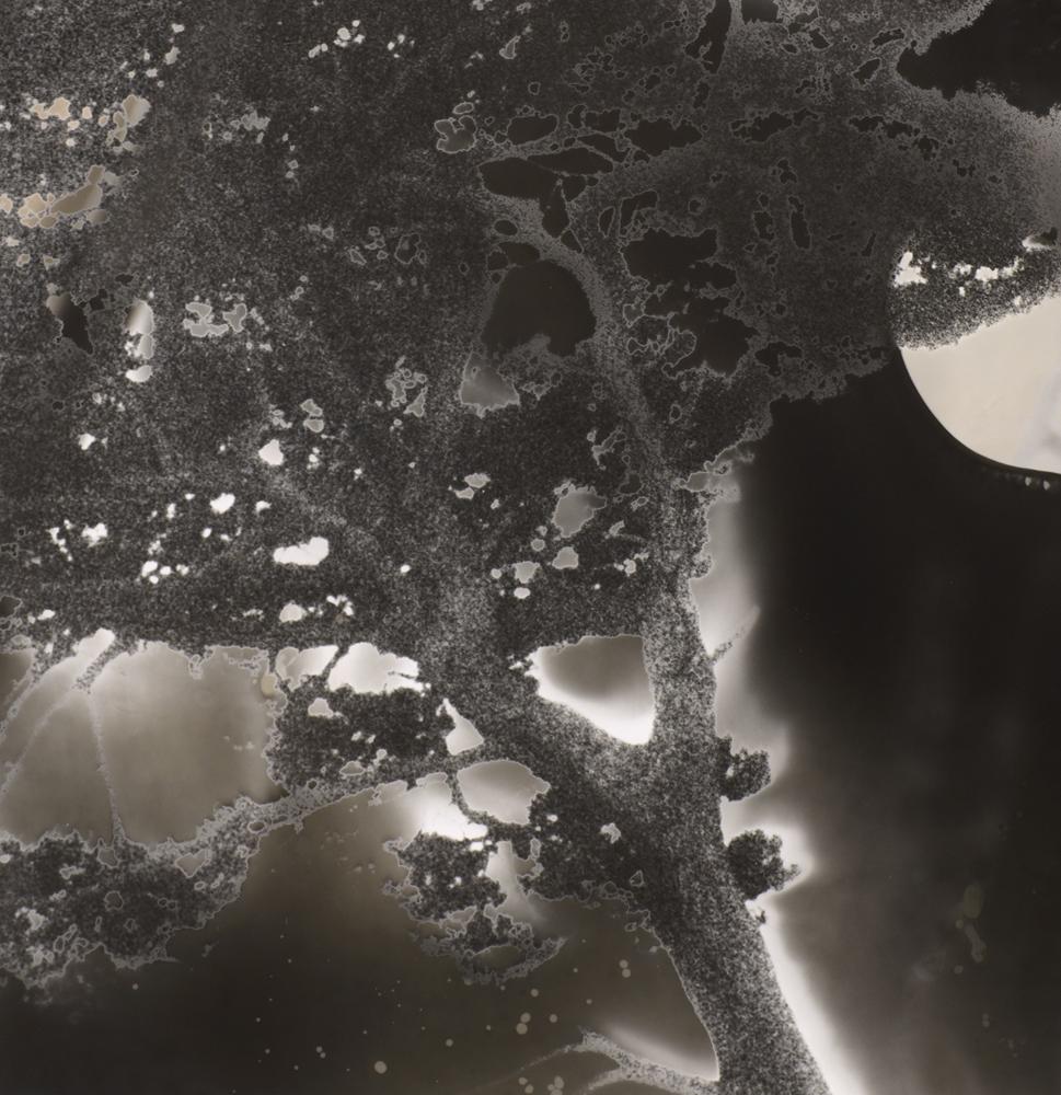 Jane Olin Intimate Conversation 1 (Tree with Moon).jpg