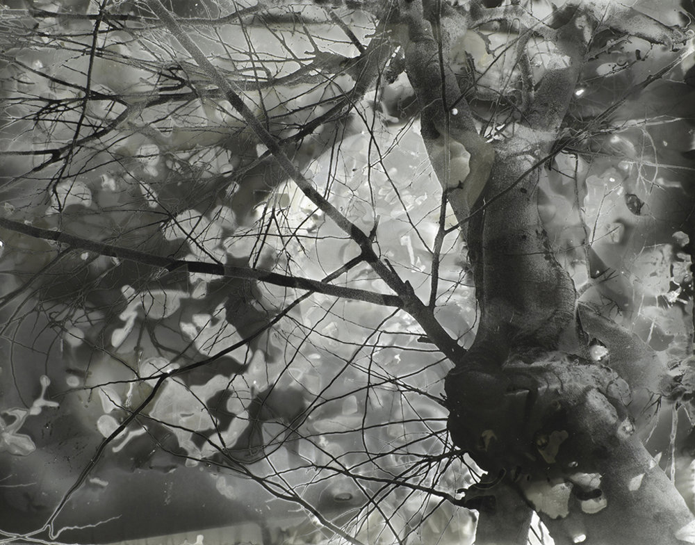 Jane Olin Intimate Conversation 8 (Walk in the Woods).jpg
