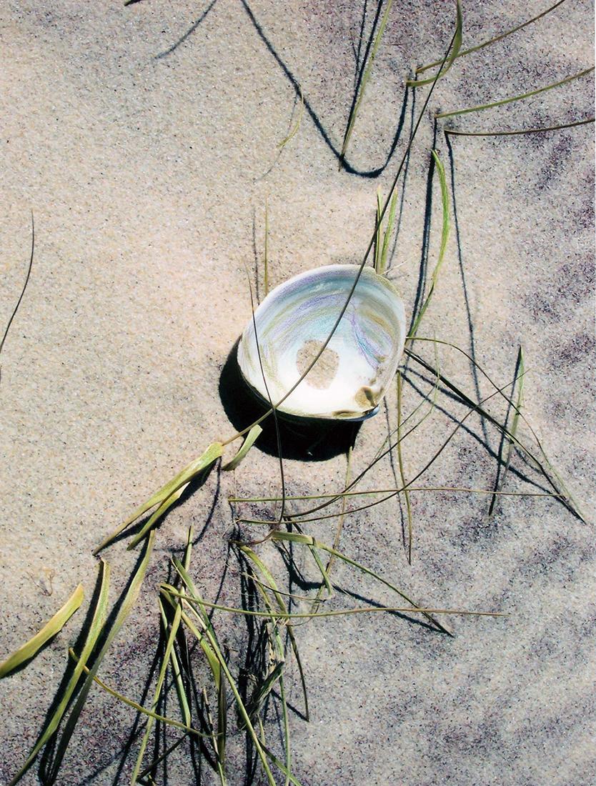 Mia Wisnoski_Beach Grass Clam.jpg