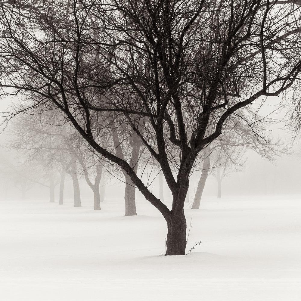 MichaelKnapstein_Winter_DecemberFog.jpg