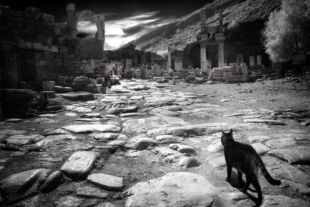 Dolores Smart_Cats at Ephesus Turkey_EveningStroll.jpg