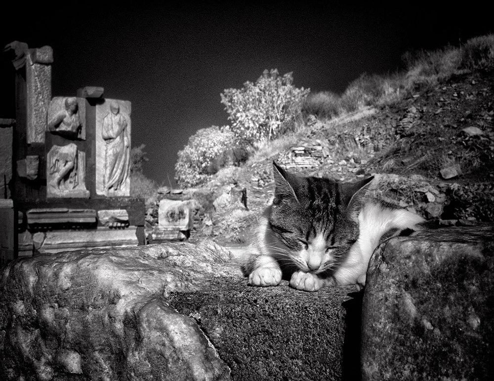 Dolores Smart_Cats at Ephesus Turkey_InbetweenTourists.jpg
