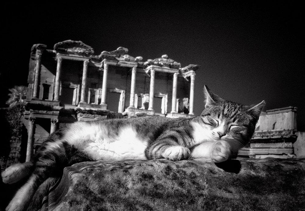 Dolores Smart_Cats at Ephesus Turkey_MorningFreshUp.jpg