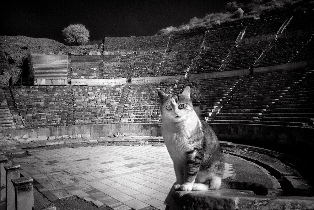 Dolores Smart_Cats at Ephesus Turkey_TicketsPlease.jpg
