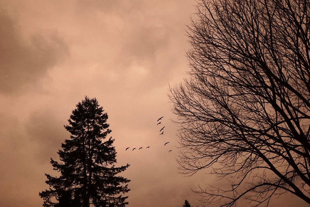 KayErickson_Birds_Away.jpg