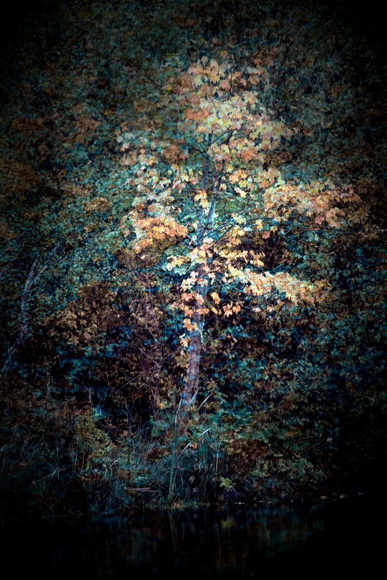 ReneRoalf_AutumnSeries_Untitled1.jpg