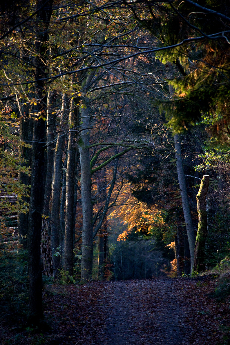 ReneRoalf_AutumnSeries_Untitled3.jpg