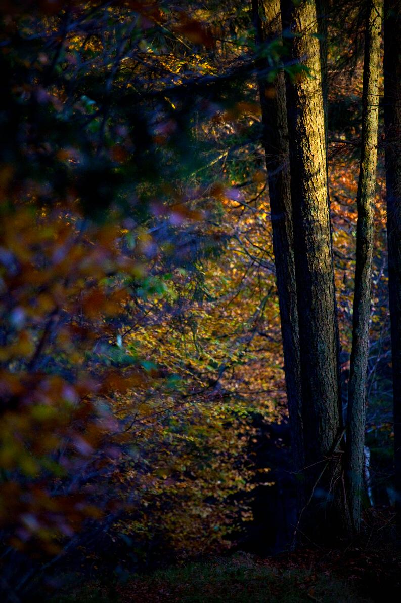 ReneRoalf_AutumnSeries_Untitled4.jpg