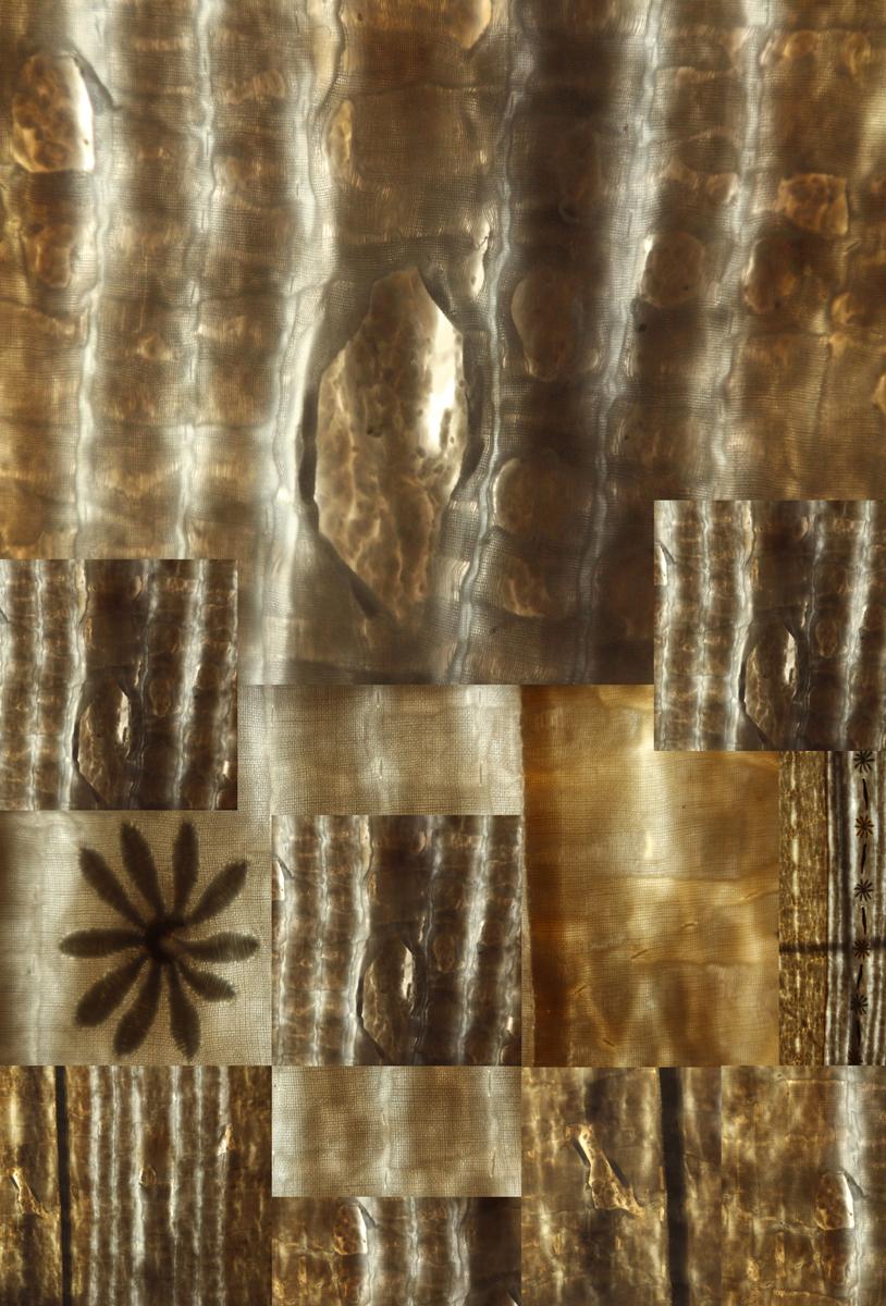 Rosa Maria de la Cueva Peterson_(A Contraluz)_Bullion Behind an Utilitarian Quilt.jpg
