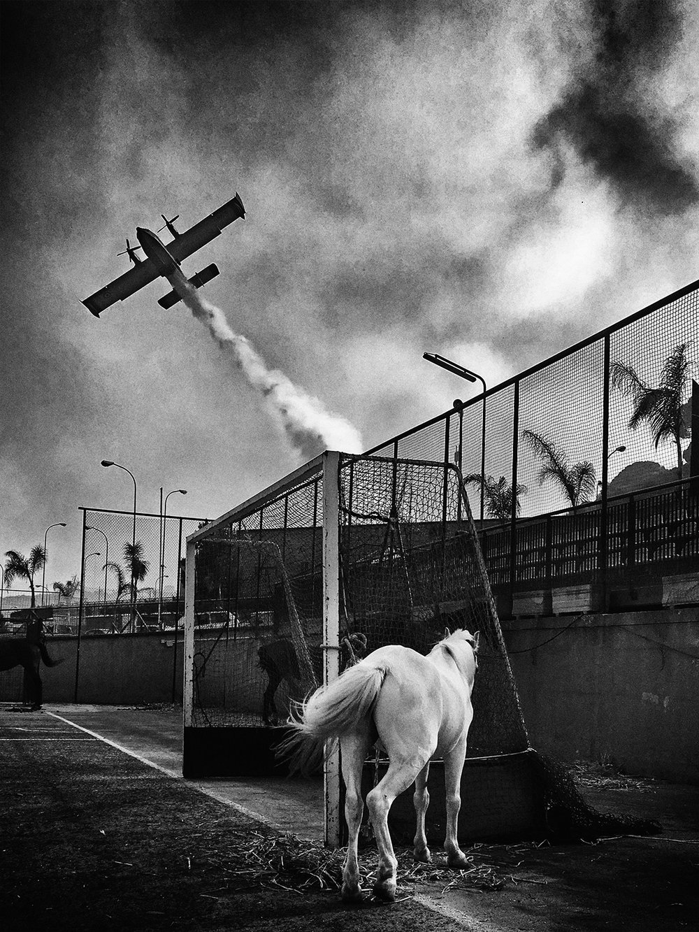 SimonaBonanno_horse_and_canadair.jpg
