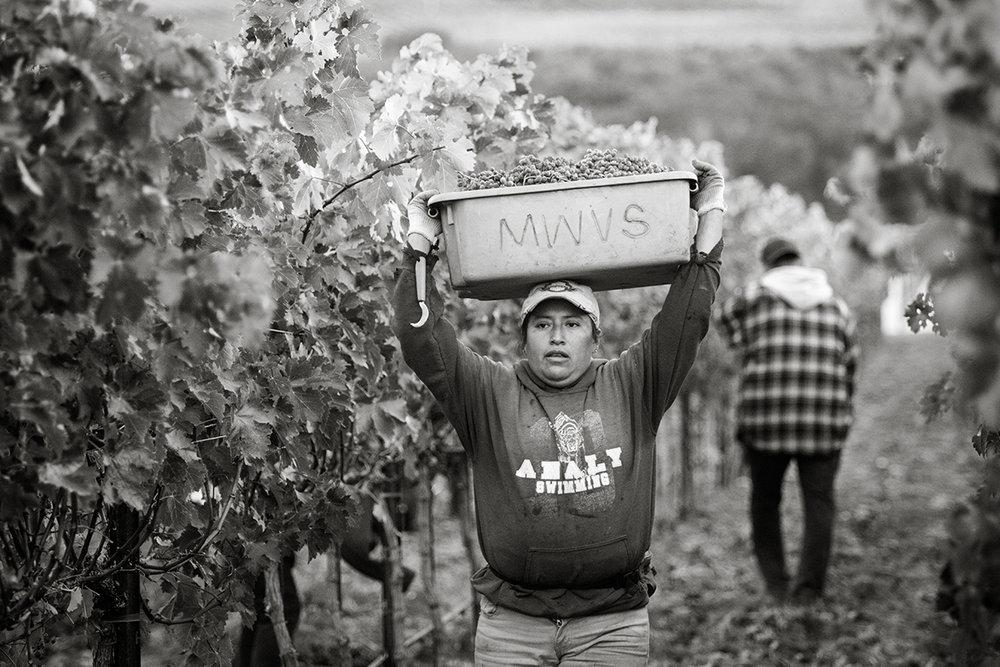 SuzanneBeckerBronk_Vineyard Women_Harvest 2.jpg