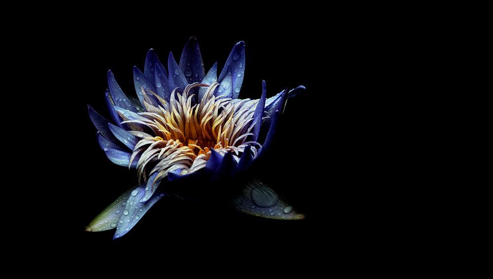 cynthiadickinson_botanics_wharf.jpg