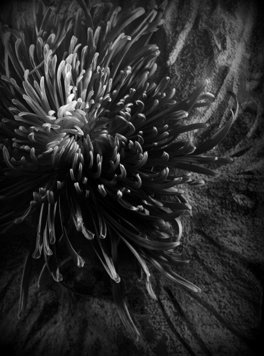 m.jeltema_creating a universe_1.jpg
